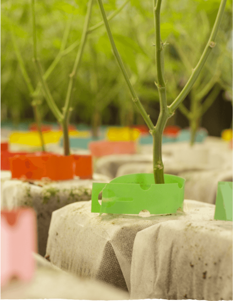 Clone plants